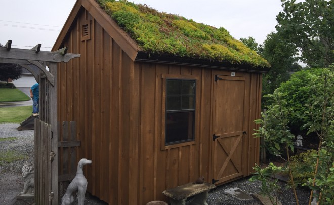 Green Roof Shed Install