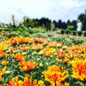 Fall Is for Planting Sale @ Ken's Gardens