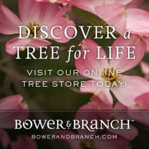 Bower and Branch trees from your Greenhouse and Garden Center in Lancaster, Pa