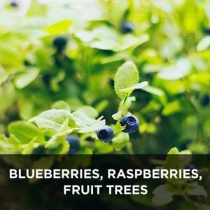 Blueberries, Raspberries, Fruit trees from your Greenhouse and Garden Center in Lancaster, Pa