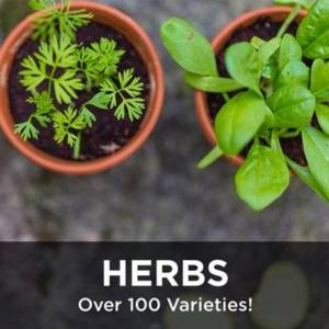 Herbs from your Greenhouse and Garden Center in Lancaster, Pa