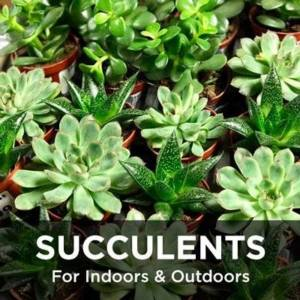 Succulents for indoors and outdoors from your Greenhouse and Garden Center in Lancaster, Pa