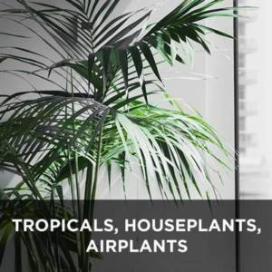 Tropical plants, succulents, airplants, houseplants from your Greenhouse and Garden Center in Lancaster, Pa