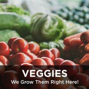 Veggies from your Greenhouse and Garden Center in Lancaster, Pa
