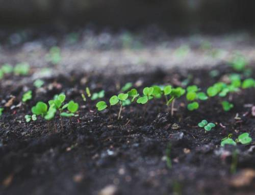 6 Thoughts on Starting Seeds Indoors