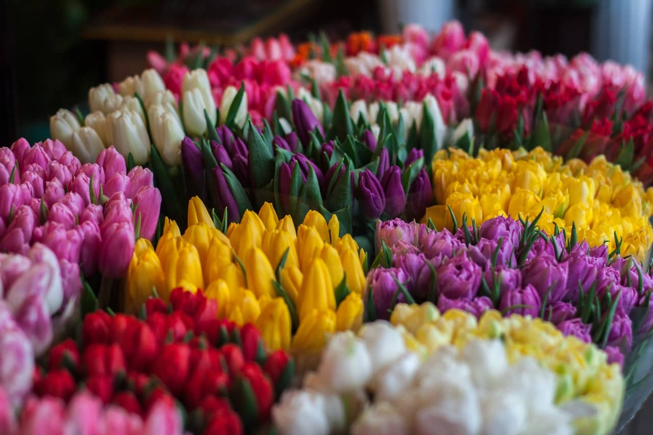Caring for Easter Flowers