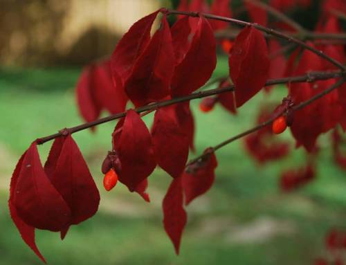 Replacements for Burning Bush
