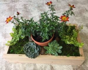 OUTDOOR SUCCULENT/MOSS CENTERPIECE | Intercourse Store @ Ken's Gardens | Intercouse Store | Ronks | Pennsylvania | United States